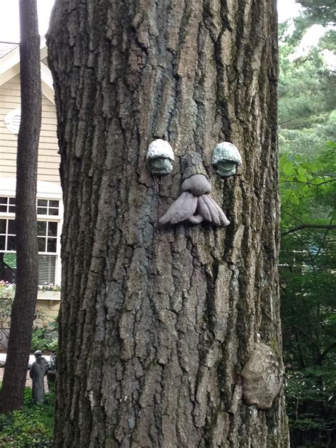 tree faces tree faces in weston and wellesley real estate