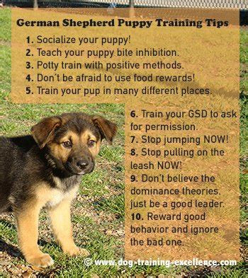 how to raise a german shepherd puppy 10 best german shepherd puppy tips