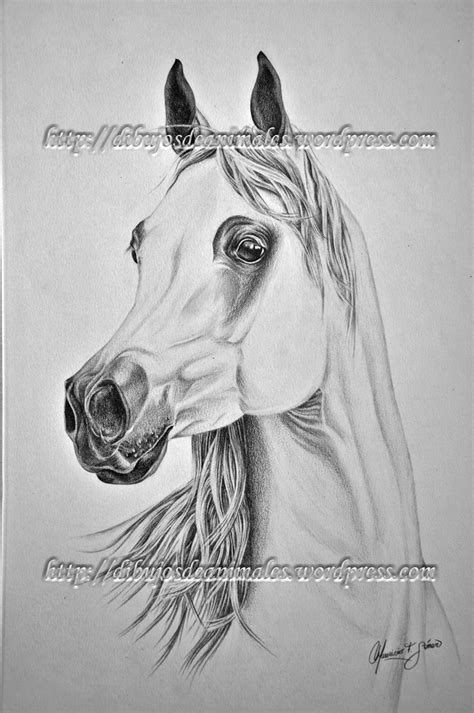 caballo a lapiz dibujos de animales caballo a lapiz dibujos de animales