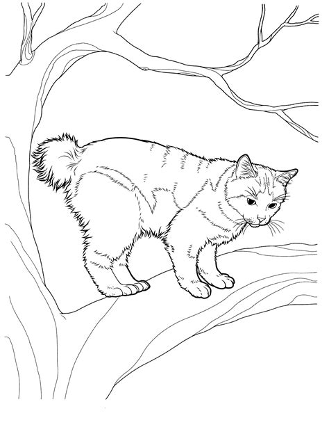 manx cat coloring page manx cat coloring page free coloring pages