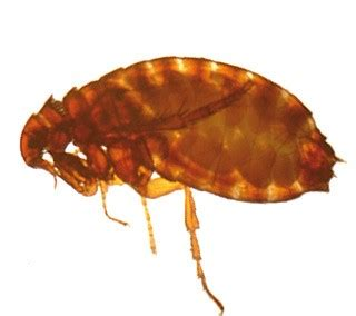 flea tick and worm treatment for dogs uk flea worms related keywords flea worms