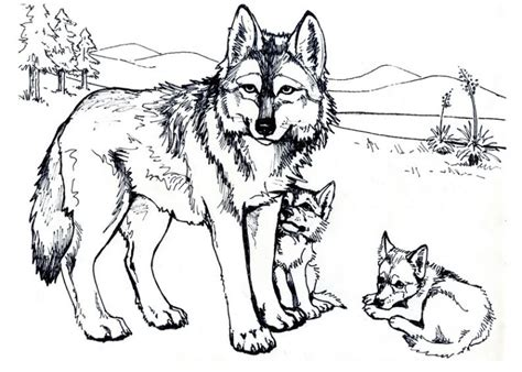 hard wolf coloring pages ausmalbilder f 252 r kinder wolf 7