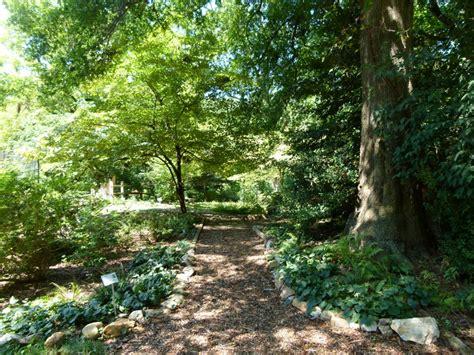 trees to plant in backyard shade garden flowers wallpaper landscaping gardening ideas