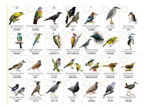 types of birds list
