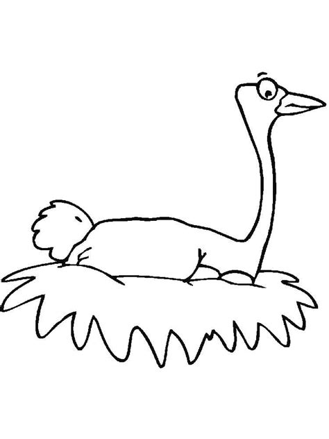 ostrich coloring pages download and print ostrich