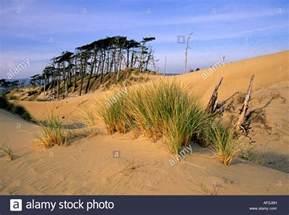 oregon dunes national recreation area map a view of the oregon dunes national recreation area near