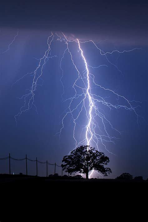 tree lightings pin lightning strike on