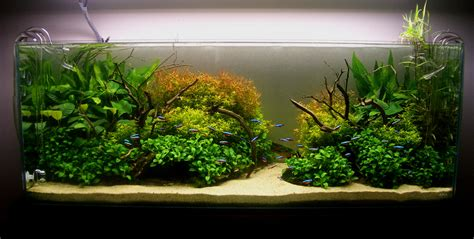 Aquascaping Magazine by Aquascape River Www Pixshark Images Galleries With
