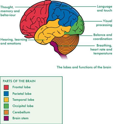 diagram with functions brain image brain functions diagram