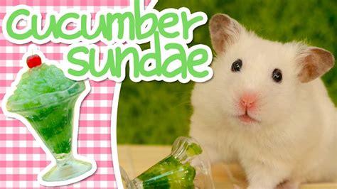 Hamster Kitchen by Cucumber Sundae Hamster Kitchen Funnycat Tv