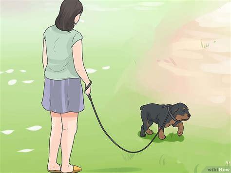 andare spesso in bagno a defecare come prendersi cura di un cucciolo di rottweiler