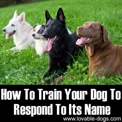 how to your its name lovable dogs how to your to respond to its name lovable dogs
