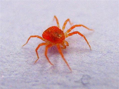 giant red spider flickr photo sharing