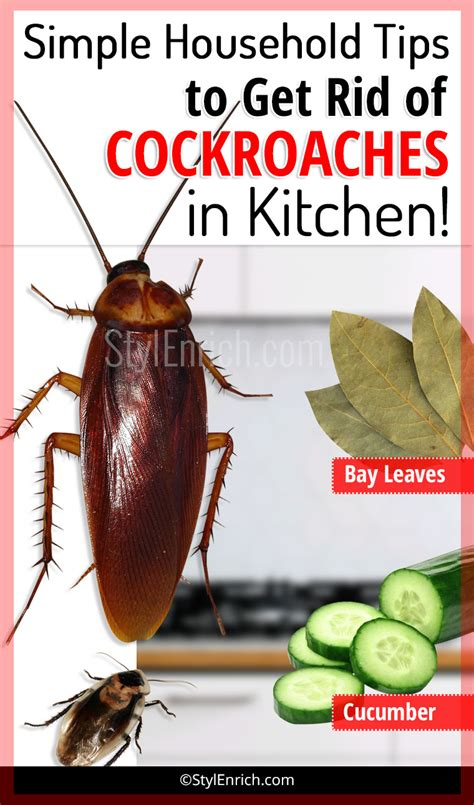 how to get rid of cockroaches in kitchen cabinets how to get rid of cockroaches in kitchen using simple
