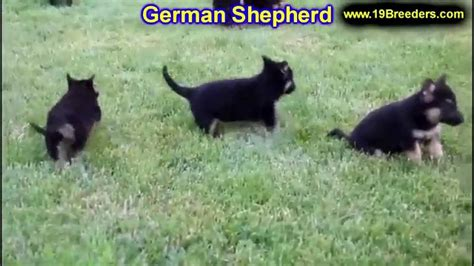 puppies for sale in birmingham al german shepherd golden retriever puppies breeds picture