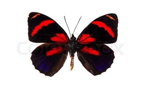 red and black butterflies red and black butterfly isolated on white stock photo