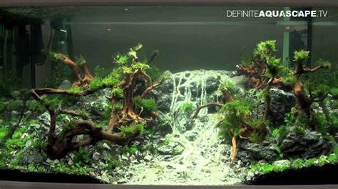 How To Aquascape A Planted Tank by Aquascaping Qualifyings For The Of The Planted