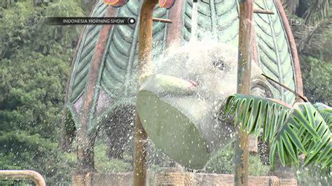 Maxy Gajah febry berwisata air di kung gajah ims