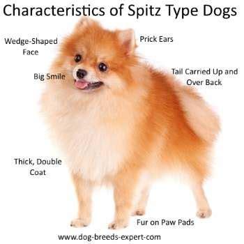 characteristics of dogs alaskan breeds