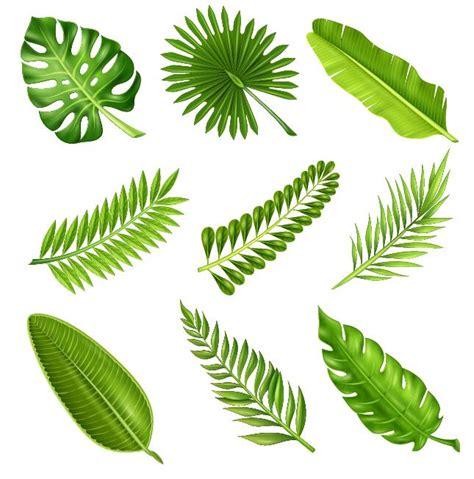 tropical plant leaves tropical plant leaves vector set 01 vector plant free