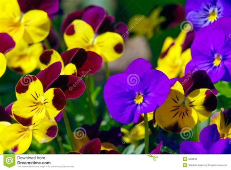 flowers pictures flowers stock photography image 593042
