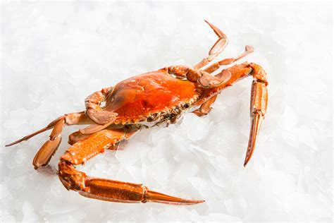 Swimmer Blue by Fresh Blue Swimmer Crab Cooked Cooked Seafood