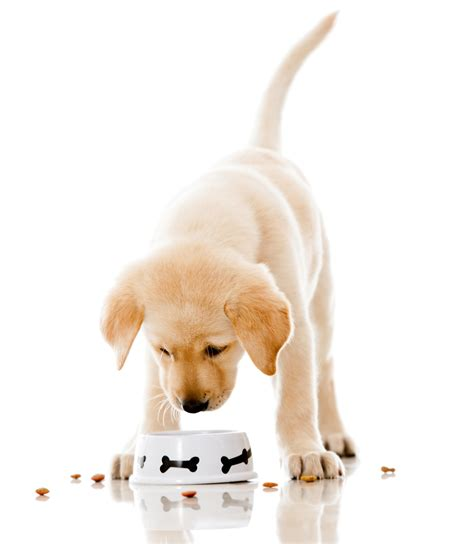 puppy nutrition eat this food every day