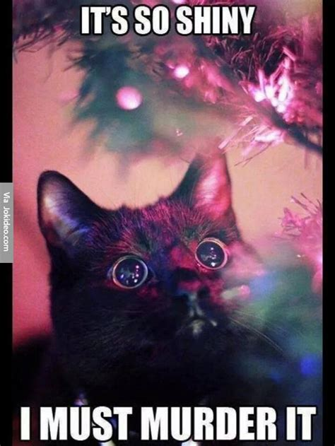 Christmas Cat Meme - hagrid s hard rock happymus raffle ticket list on p
