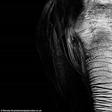 imagenes impresionantes en blanco y negro el lado m 225 s oscuro de la belleza animal fotos planeta