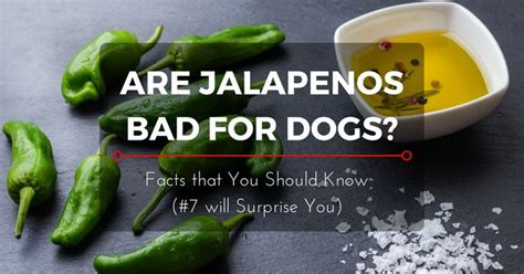 are dogs bad for you are jalapenos bad for dogs all that you need to 2017