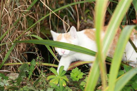 katzenkot im garten katzenkot im garten katzenschreck katzen vertreiben mit