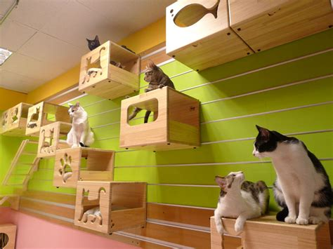 catswall innovative cat furniture and supplies