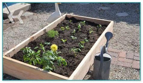 vegetable garden starter plants garden wall plant holders