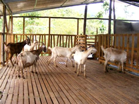 Low Cost House Plans by Low Cost Goat Housing Business Diary Ph