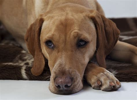 can dogs get tetanus tetanus or lockjaw in cats and dogs pets4homes