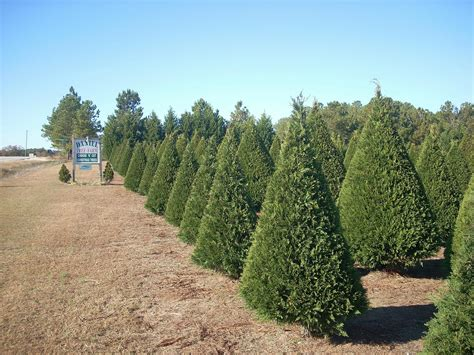 28 best christmas tree farms kansas lifestyle family
