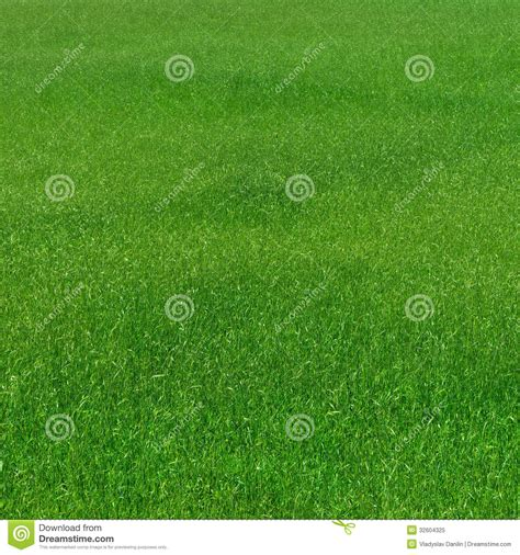 pattern nature grass grass pattern natural royalty free stock photo image