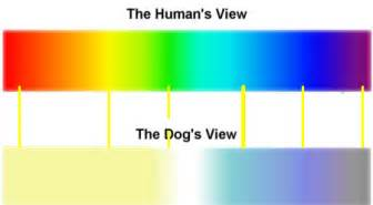 dogs see color what dogs see
