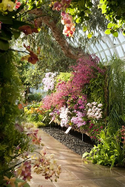 Orchid Show Botanical Gardens Best 25 Orchid Show Ideas On The Orchid Orchid Show 2016 And Blanc