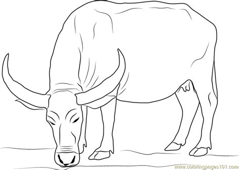 water buffalo coloring page free buffalo coloring pages
