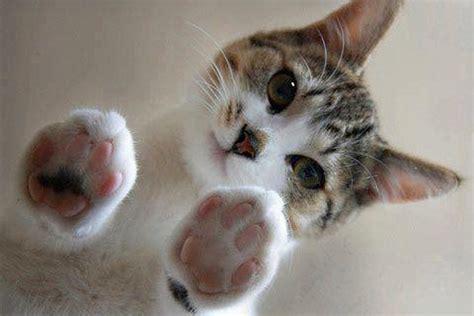 google imagenes de gatos gatos monos buscar con google gatos kukis pinterest