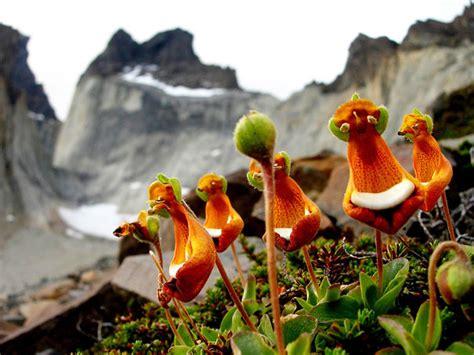 foto di fiori strani i 10 fiori e orchidee che sembrano animali e non