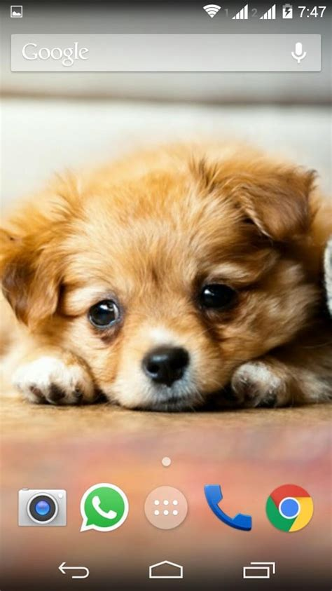 cute puppy android wallpapers for free cute little puppies wallpapers android apps on google play