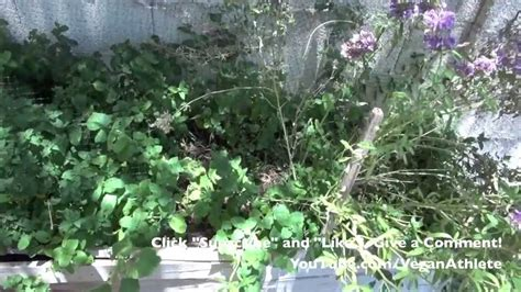Gardening In Arizona Backyard Garden Arizona Viyoutube