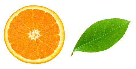 illustrator tutorial orange how to create quickly a realistic vector orange in adobe