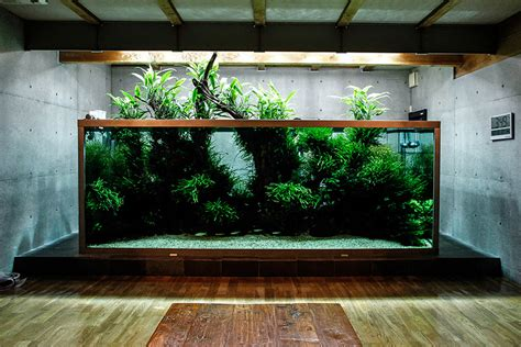 iguwami aquarium  simple aquascape aquariuminfoorg