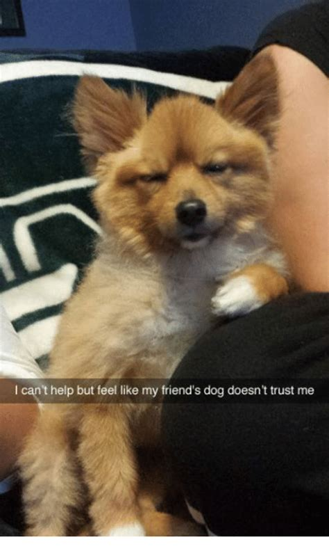 my puppy doesn t like me 25 best memes about feel like feel like memes
