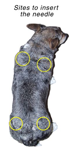subcutaneous fluids for dogs subcutaneous fluid administration in dogs vca animal hospital