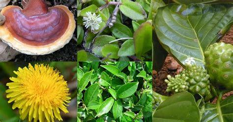 Tah Buah Dan Sayur L buah dan sayur yang menjadi tanaman herbal antioksidan