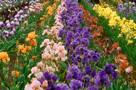 Beautiful Flowers In Garden Beautiful Flower Garden Flower Forest Cool Wallpapers Wonderful Flower Garden
